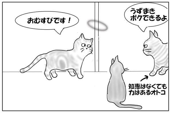 マッチョ猫参戦