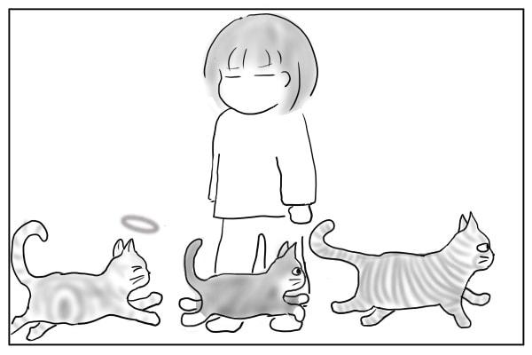 入ってきた猫たち