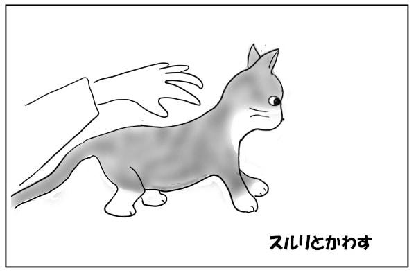 低い姿勢をとる猫