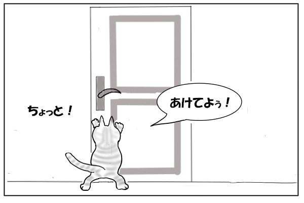 隣で騒ぐ猫
