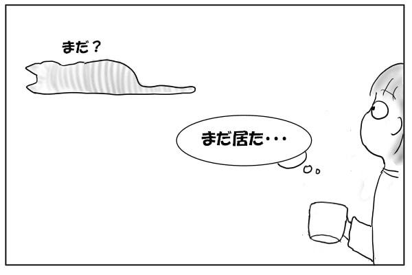 しつこい猫
