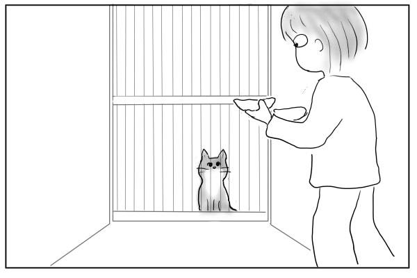 木戸の向こうで待つ猫