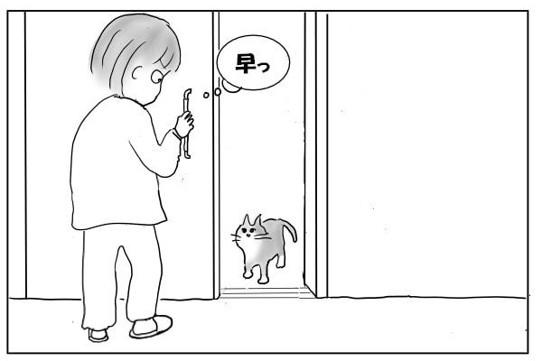 ドアの前で待ち構える猫