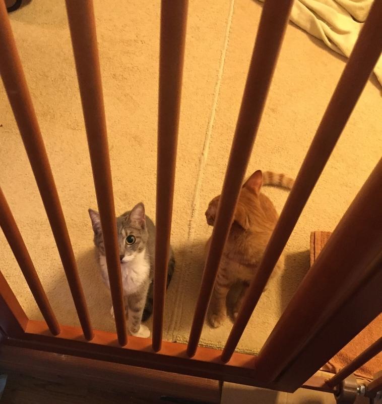 ドアをふさぐ猫