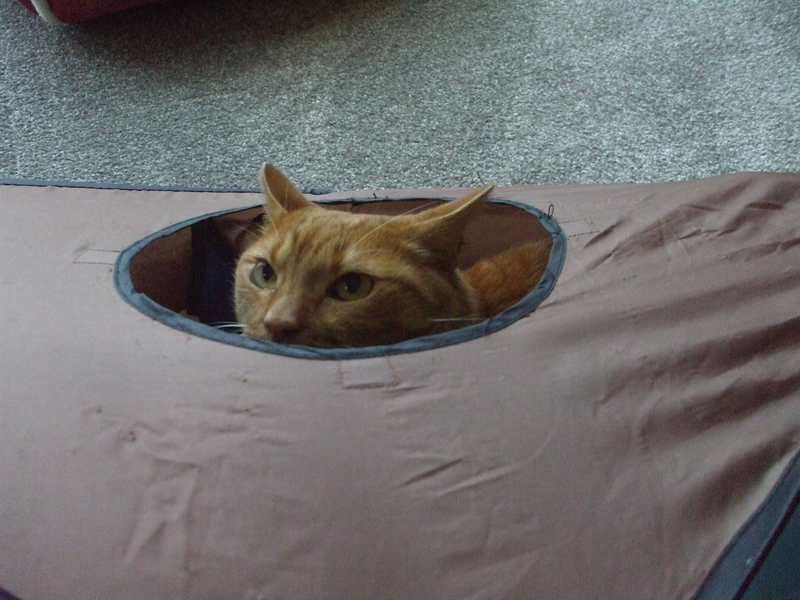 テントの中の猫