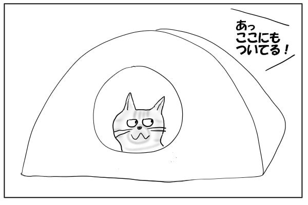 テントにこもる猫