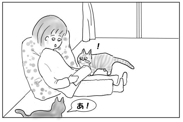 かち合う猫