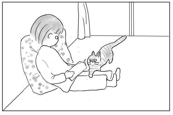 無断で膝に乗る猫