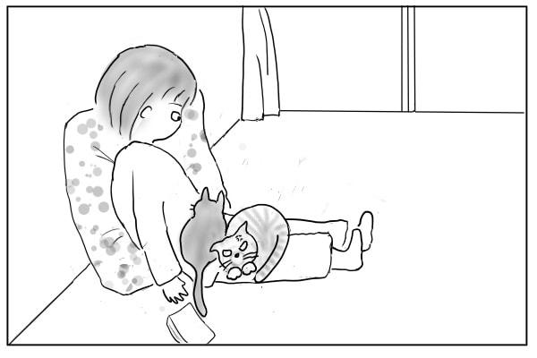 膝におさまる猫