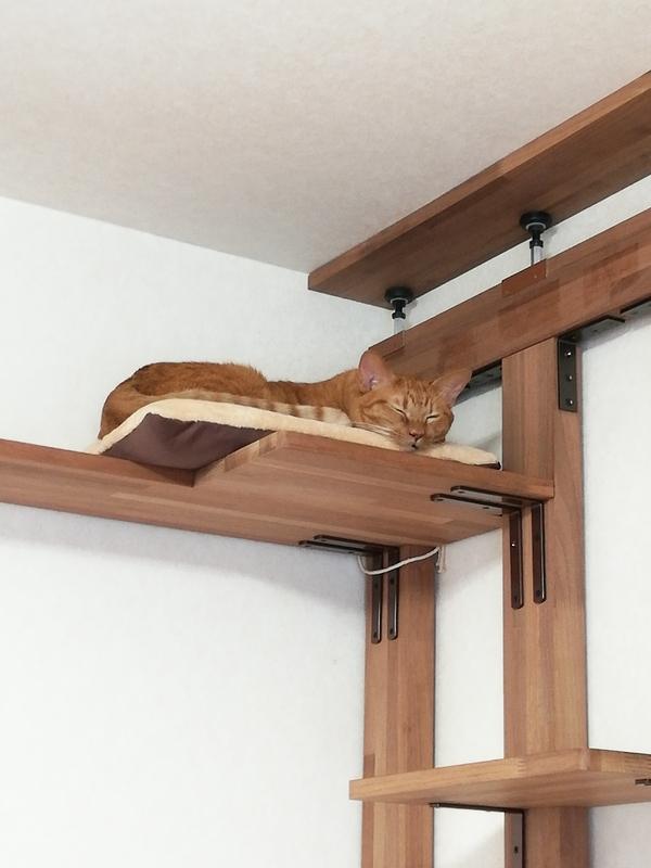 キャットウォークで寝る猫