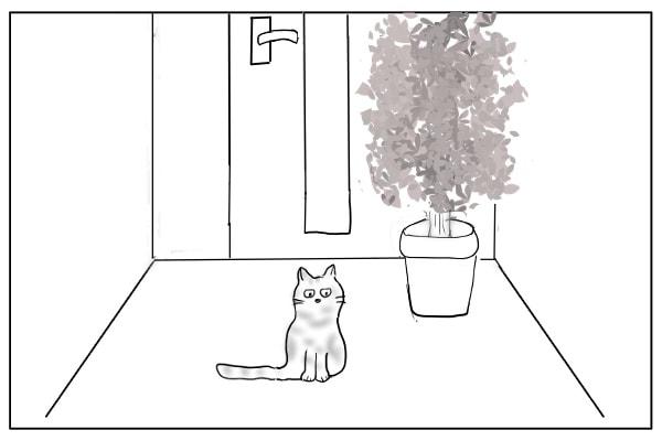 玄関で暮らす猫