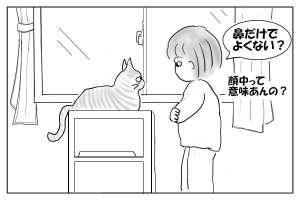 猫への質問
