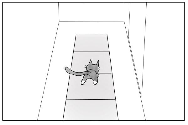カーペットの上を歩く猫