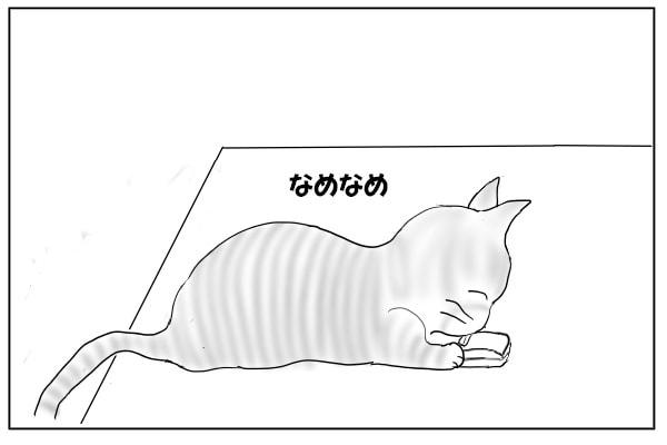財布を舐める猫