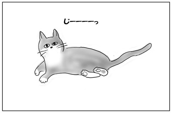 じっと見上げる猫