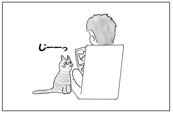 更に見つめる猫