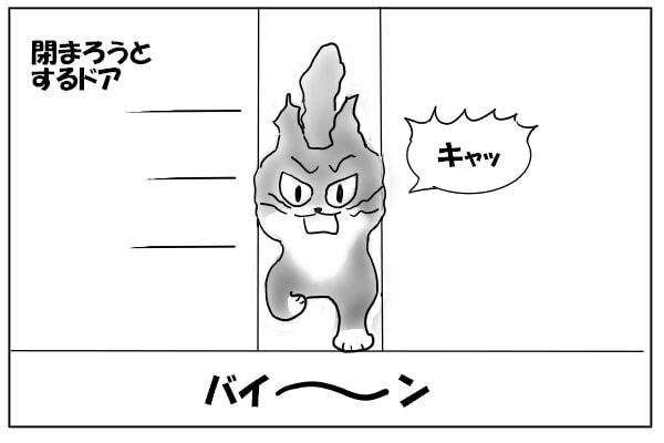 ドアに顔を挟まれる猫