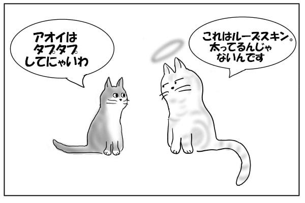 グレー猫とアメショー