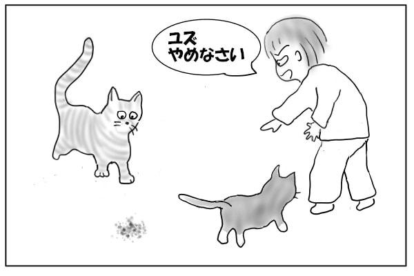食いしん坊猫