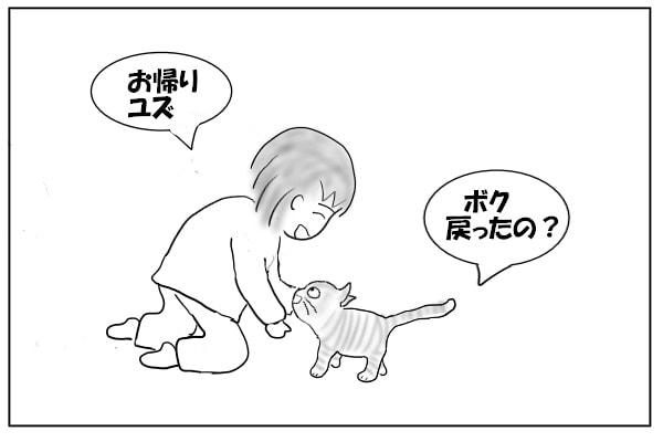 帰宅した猫