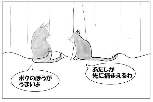 貼り合う猫たち