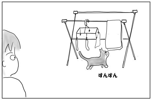部屋干しと猫
