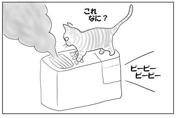 加湿器にのる猫