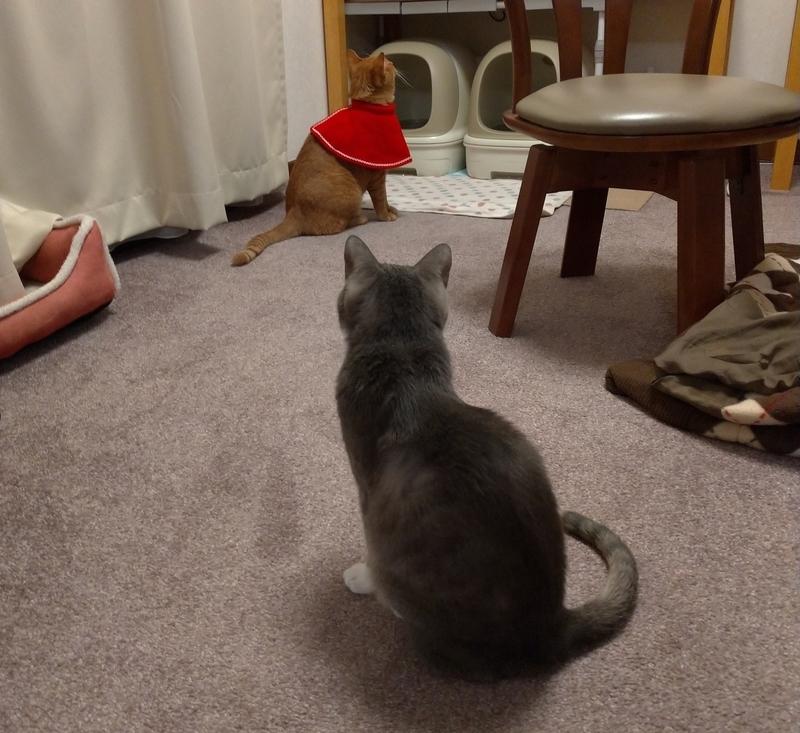 遠巻き眺める猫