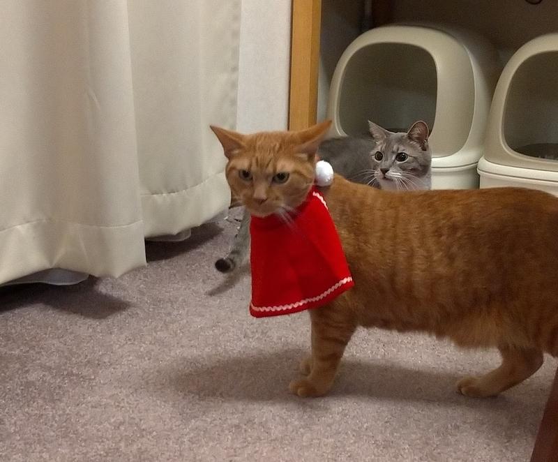 気にする猫