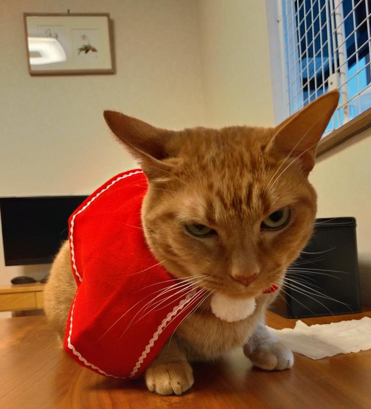 ご立腹の猫