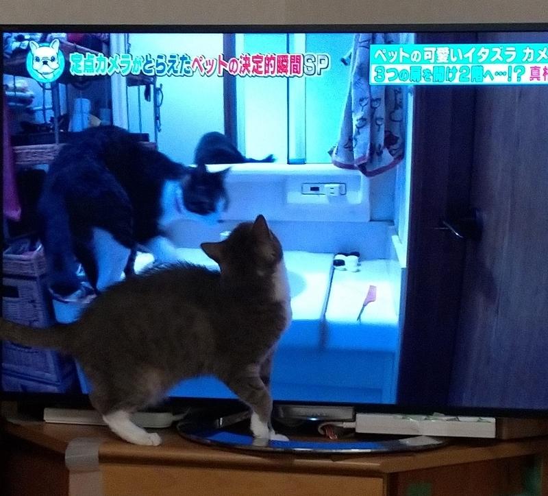 猫を凝視する猫