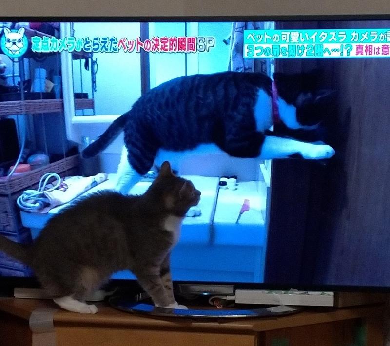 猫を目で追う