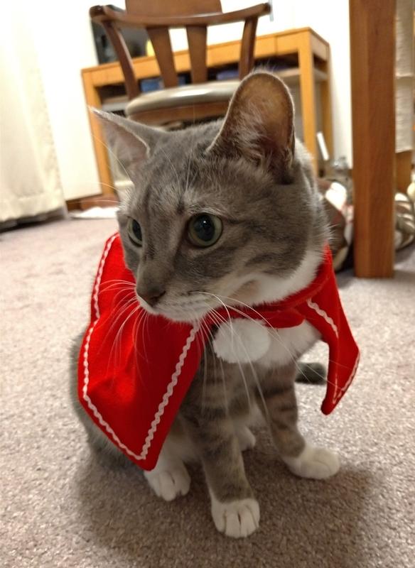 帽子を脱いだ猫
