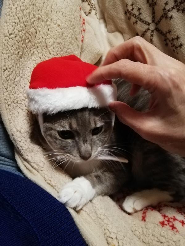 サンタの帽子をかぶった猫