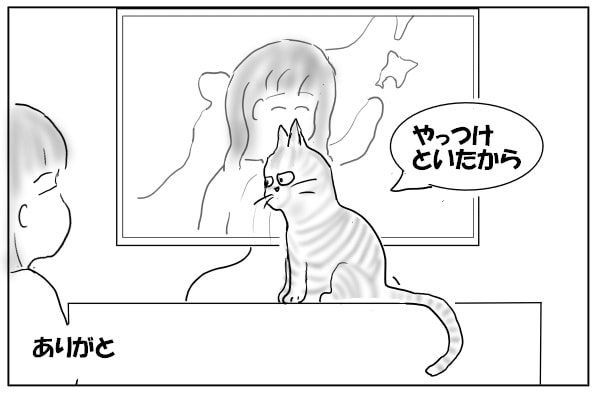 やっつけた猫