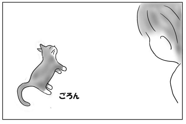 横にになる猫