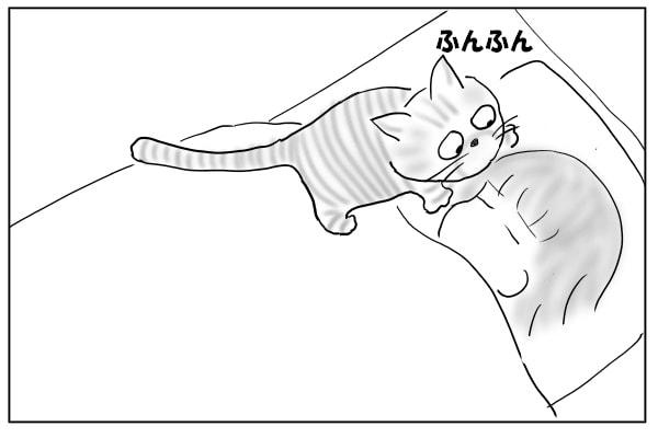 頭をかじる猫