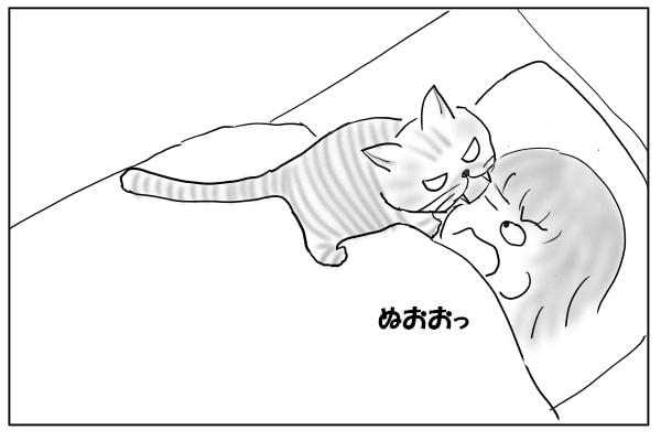 顔もかじる猫