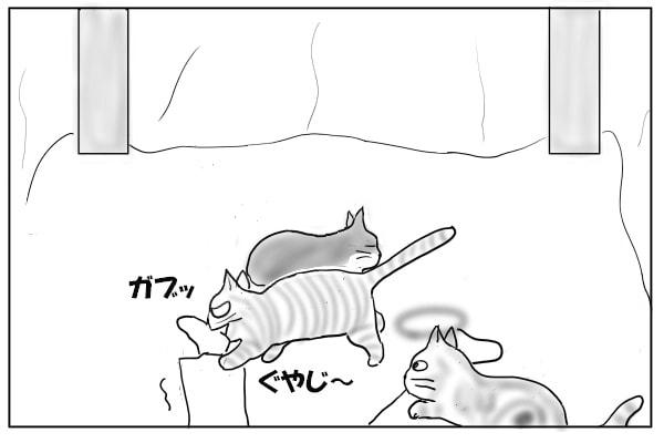 足を噛む猫