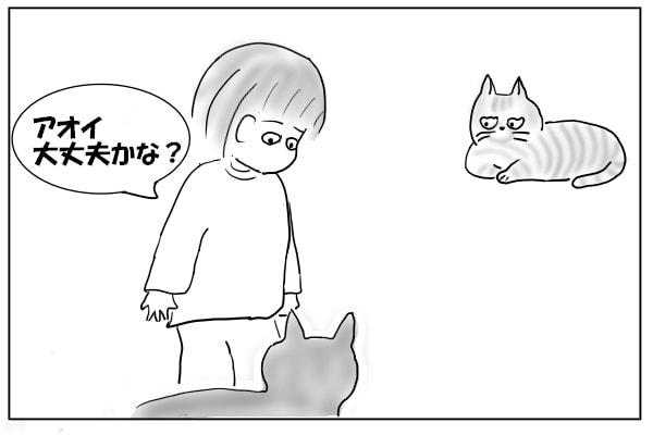 心配する飼い主