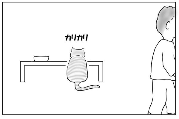猫の食事時