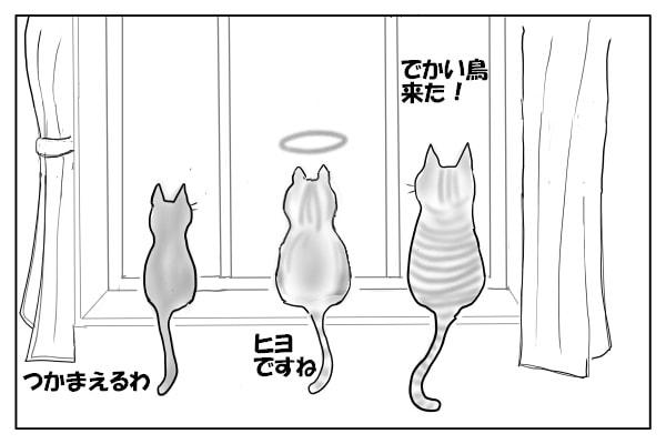 バードウォッチングする猫