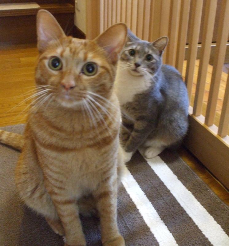 玄関の猫たち