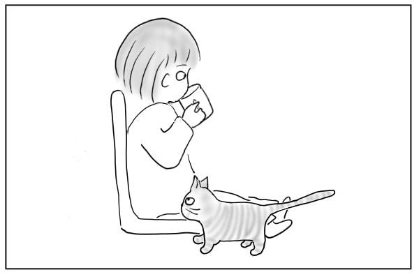 通り過ぎる猫