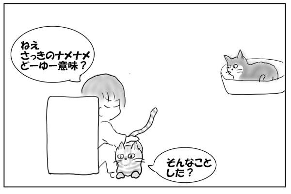 怪訝に見る猫