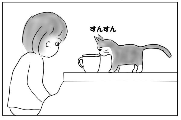 コタツの上の猫