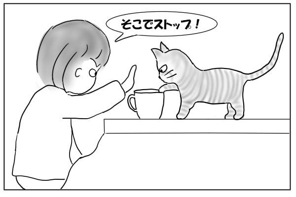 カップに足を突っ込む猫
