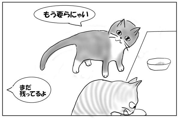 ごはんを残す猫
