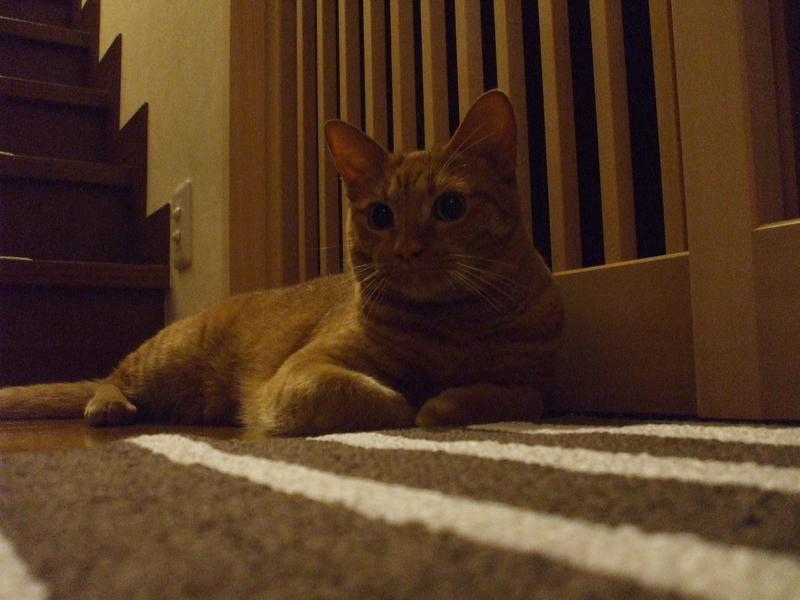 玄関マットに乗る猫