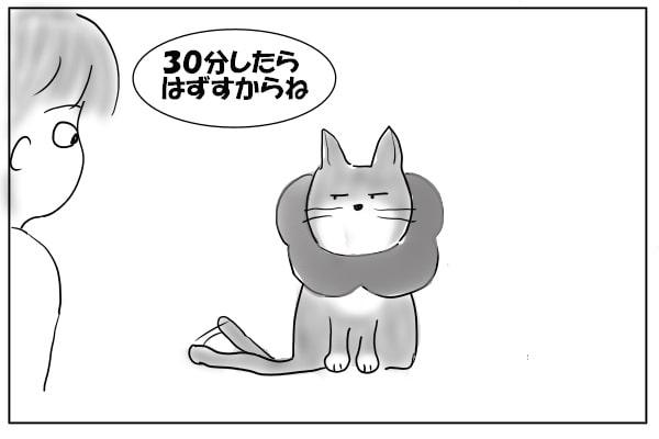 エリカラした猫